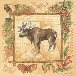 AP042 - Phillips, Anita - Moose