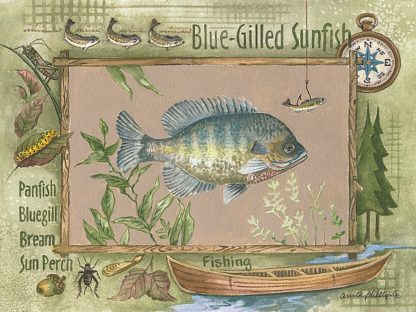 AP065 - Phillips, Anita - Blue-Gilled Sunfish