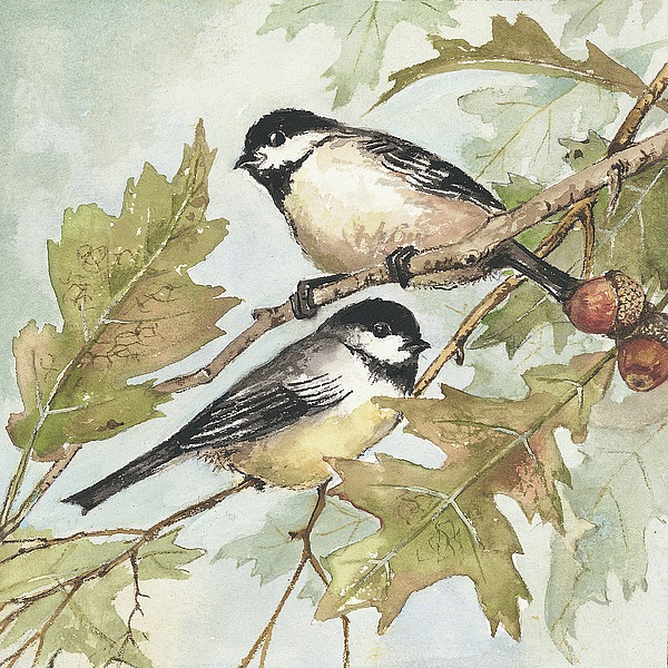 AP1316 - Phillips, Anita - Birds II