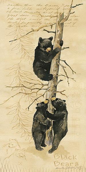AP1317 - Phillips, Anita - Black Bears