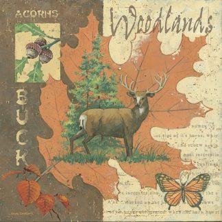 AP1690 - Phillips, Anita - Woodlands Buck