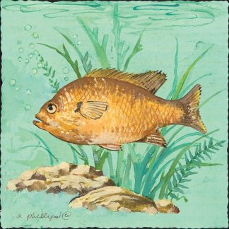 AP1752 - Phillips, Anita - Grumpy Fish