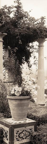 B1081D - Blaustein, Alan - Jardin Botanico
