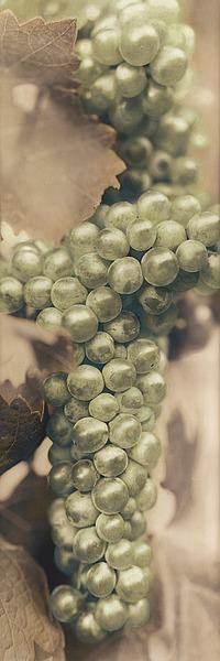 B1086D - Blaustein, Alan - Chardonnay
