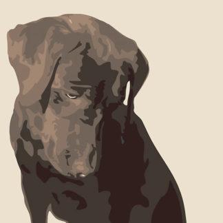 B1448 - Burrowes, Emily - Chocolate Labrador