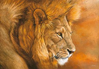 B2945 - Beck, Danielle - Lion du Serengeti