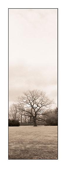 B941 - Blaustein, Alan - Chestnut Tree