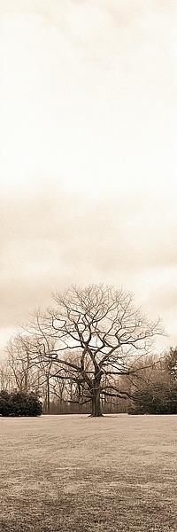 B941D - Blaustein, Alan - Chestnut Tree