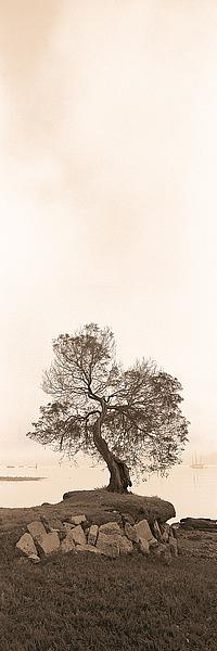 B942D - Blaustein, Alan - Coast Oak