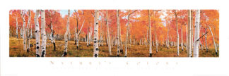 C338 - Cook, Kathleen Norris - Autumn Trees