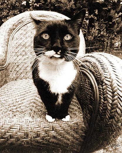 D908 - Dratfield, Jim - Kitty I