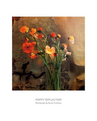 F236 - Friedman, Susan - Poppy Reflection