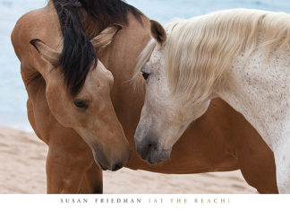 F573 - Friedman, Susan - At the Beach