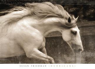 F574 - Friedman, Susan - Hurricane