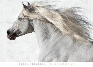 F575 - Friedman, Susan - Cassanova