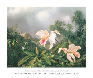 H393 - Heade, Martin Johnson - Jungle Orchids and Hummingbirds