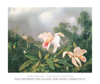 H393 - Heade, Martin Johnson - Jungle Orchids and Hummingbirds