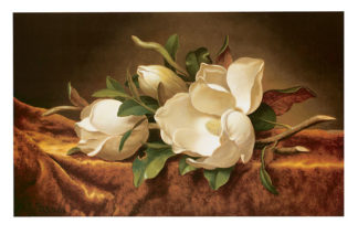 H441 - Heade, Martin Johnson - Magnolias on Gold Velvet Cloth