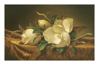 H460 - Heade, Martin Johnson - Magnolias on Gold Velvet Cloth