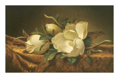 H460 - Heade, Martin Johnson - Magnolias on Gold Velvet Cloth