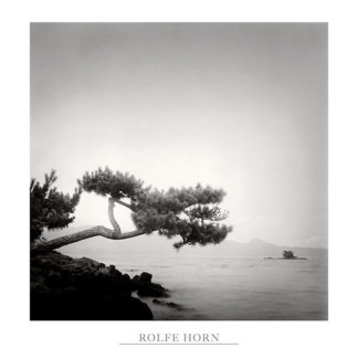 H577 - Horn, Rolfe - Two Branched Pine, Nakano Umi, Japan