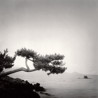 H580 - Horn, Rolfe - Two Branched Pine, Nakano Umi, Japan