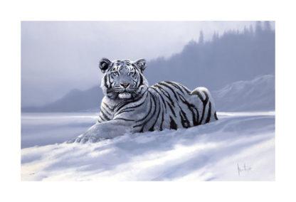 H612 - Hodge, Spencer - Siberian Tiger