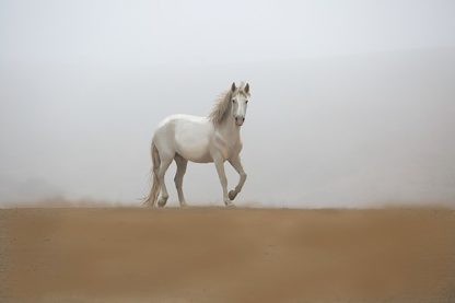 L781D - Linden, Sally - White Stallion