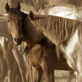 L782D - Linden, Sally - Horses Amour