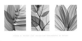 M527 - Meyers, Steven N. - Leaf Collection