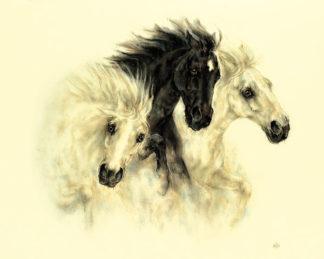 N203 - Nikki - Horses