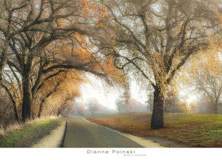 P983 - Poinski, Dianne - Gentle Morning