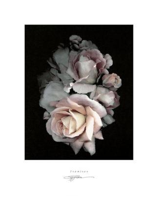 R420 - Rose, S. G. - Promises
