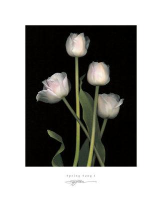 R422 - Rose, S. G. - Spring Song I