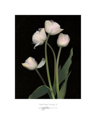 R423 - Rose, S. G. - Spring Song II