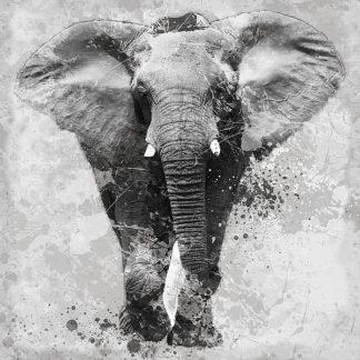 R964 - Robinson, Carol - Proud Elephant