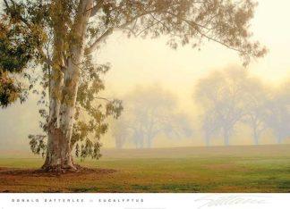S1047 - Satterlee, Donald - Eucalyptus