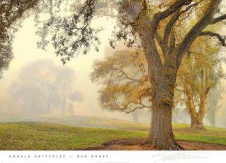 S1048 - Satterlee, Donald - Oak Grove
