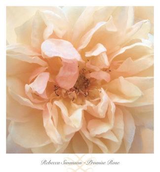 S749 - Swanson, Rebecca - Promise Rose