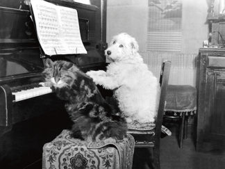 U601 - Unknown - Cat and Dog Playing Piano