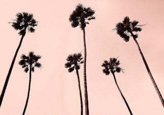 A442D - Asla, Erik - Palm Trees 1997 Copper
