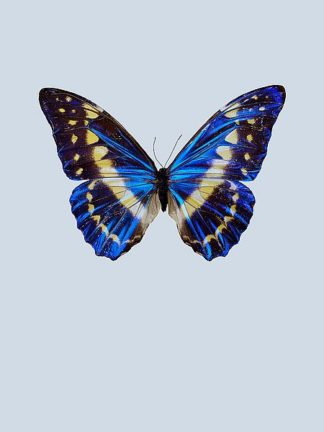 IN99029 - Incado - Blue Butterfly