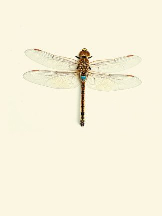 IN99035 - Incado - Dragonfly I