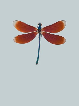 IN99036 - Incado - Dragonfly II