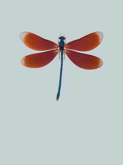 IN99036 - Incado - Dragonfly II