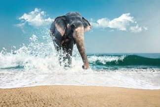 IN99058 - PhotoINC Studio - Elephant
