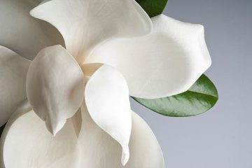 IN99063 - PhotoINC Studio - Magnolia