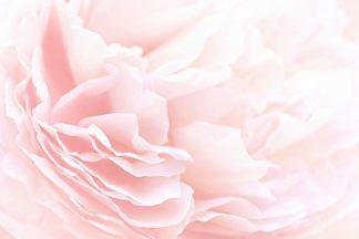 IN99069 - PhotoINC Studio - Rose 2