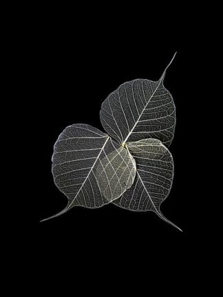 IN99111 - Incado - Dark Leaves