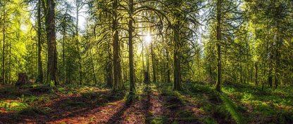 K2613D - Kostka, Vladimir - Golden Forest